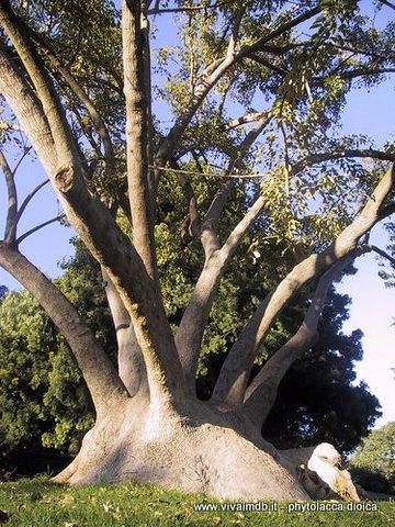 Vivai mola della badia for Vendita piante ornamentali