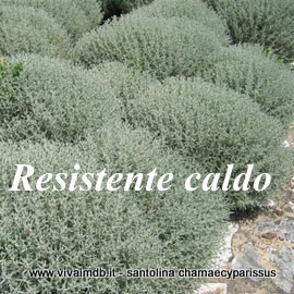 Vivai mola della badia for Arbusti sempreverdi resistenti al freddo